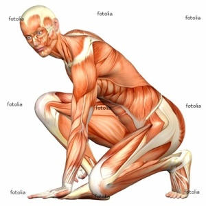 tubuh manusia